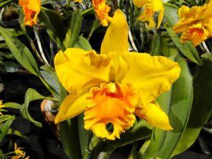Orchidea Kiállítás, Magyar Orchidea Társaság